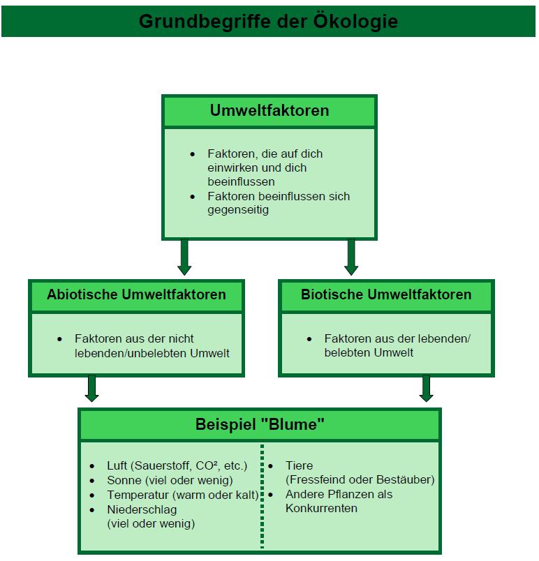 Biotische Faktoren Definition Tabelle Und Beispiel Mit Video 7