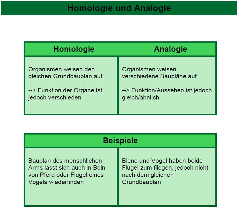 Biologie Lernen Homologie Und Analogie