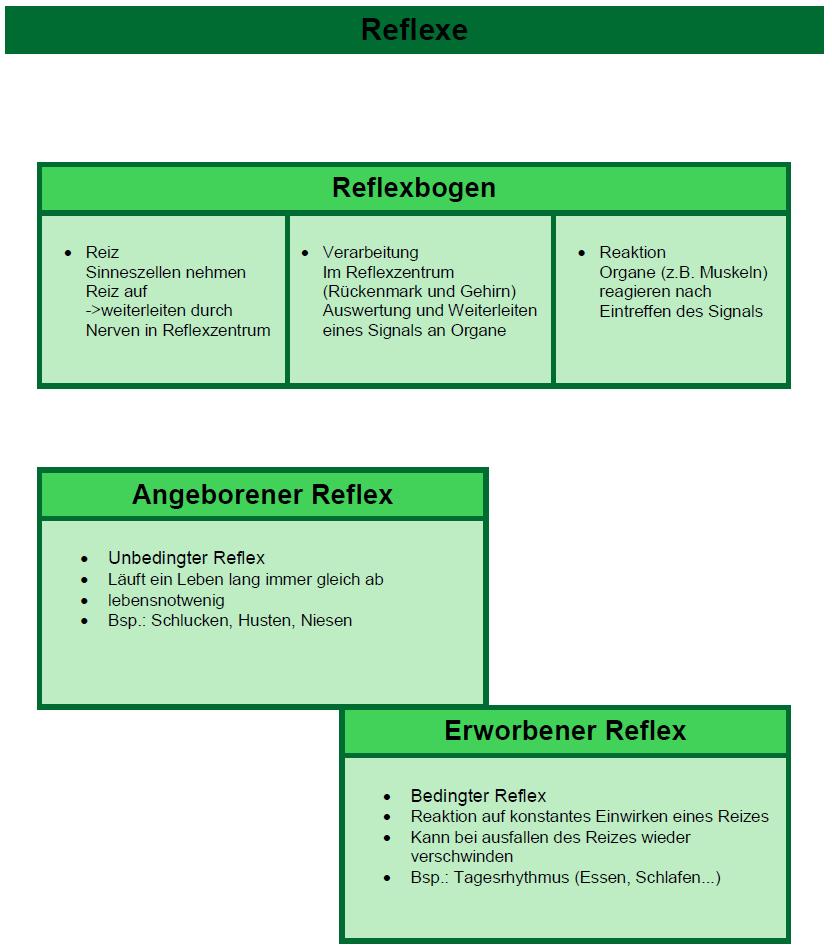 Verhalten Und Neurobiologie Reflexe 4